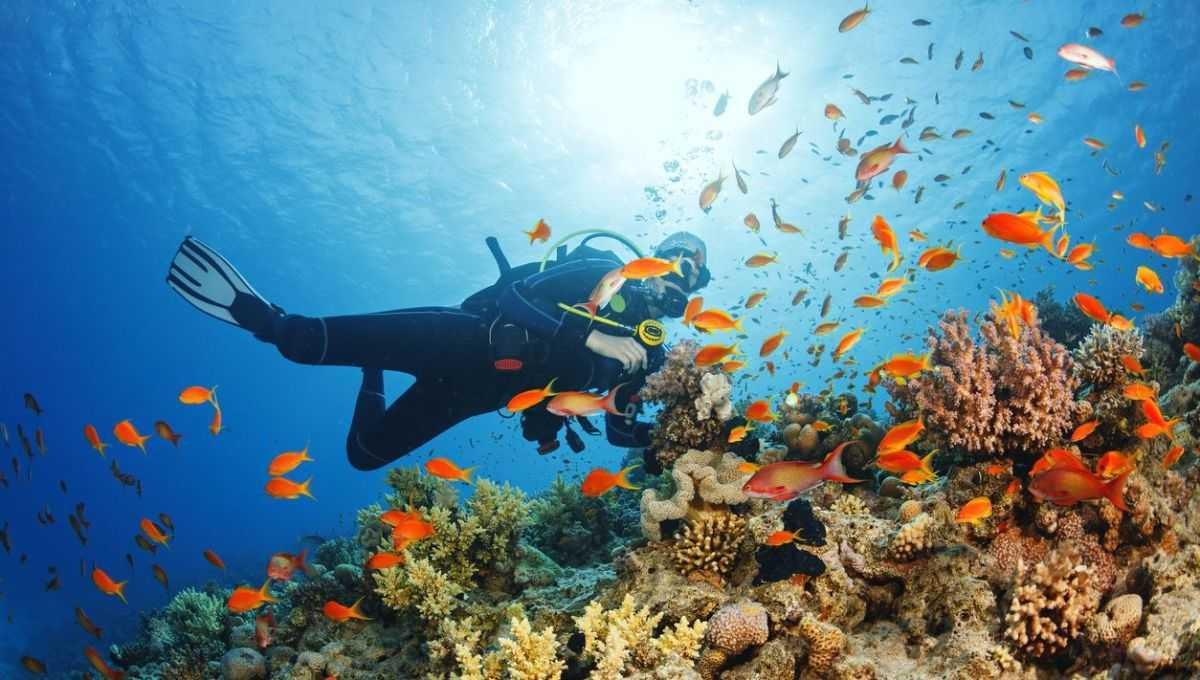 Image result for diving